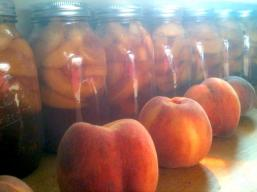 canning bourbon spiced peaches from Sauvie Island