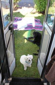 bus door dogs