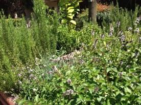 dt garden4