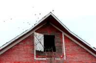 barn roof red