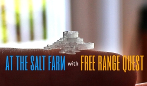 salt farm.jpg